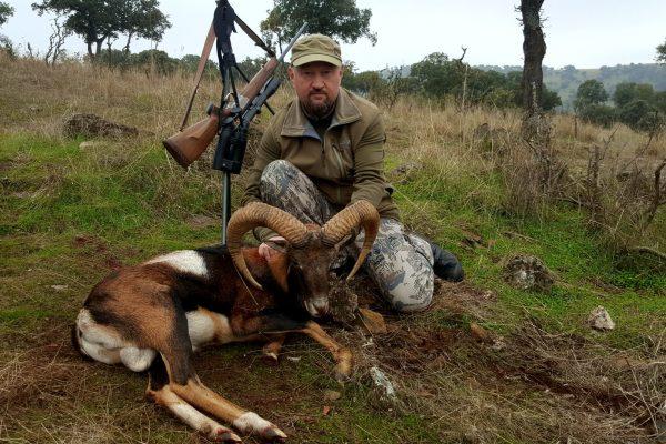 Iberian Mouflon